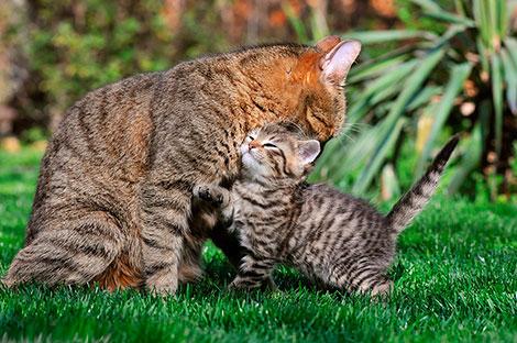 Изображение - Поздравление мамы с юбилеем оригинальное Den-mamy