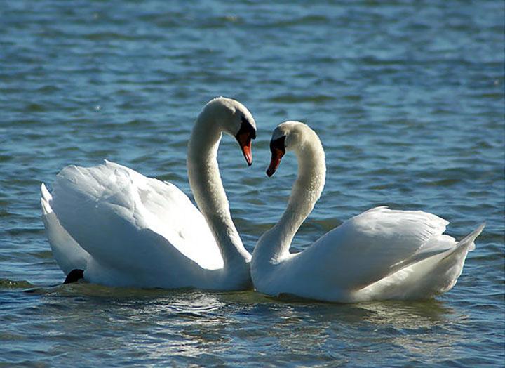 Красивые поздравления с Днем святого Валентина в прозе