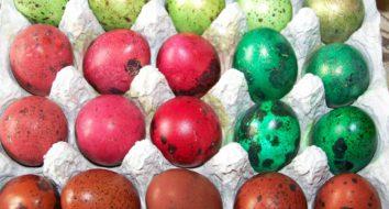 Как покрасить перепелиные яйца и можно ли это делать